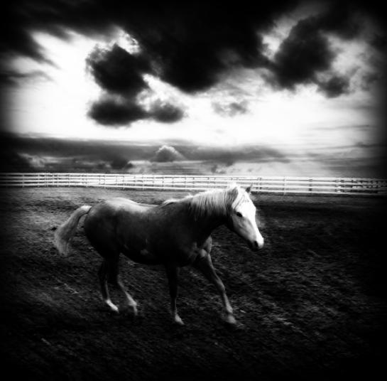 Koń na pastwisku ciemne chmury Sajmon Grafika Graficzek