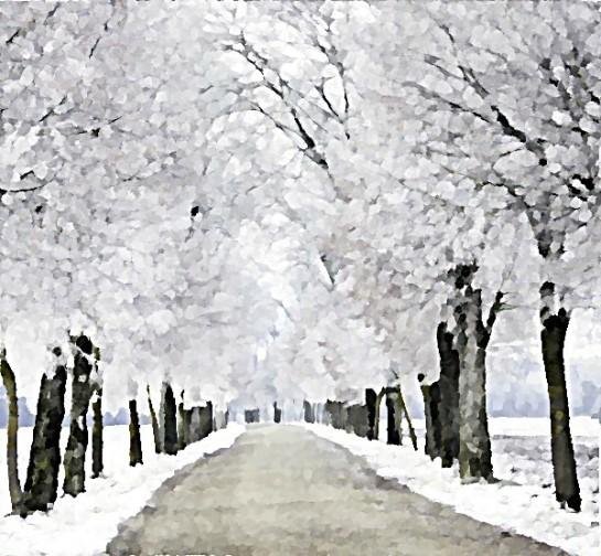 Ośnieżona zimowa droga alejka Sajmon Grafika Graficzek