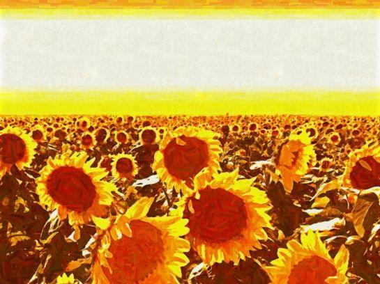 Słoneczniki pole słoneczników impresjonizm malarstwo Sajmon Grafika Graficzek