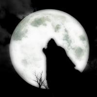 Wyjący wilk do księżyca