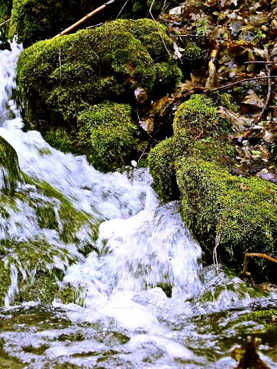 Strumyk nurt woda mech suche liście drzewo Grafika Grafiki Obrazy Zdjęcia Sajmon Graficzek